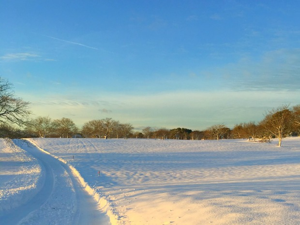 Snowy Nantucket Fields